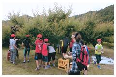 梅収穫体験をする子どもたち